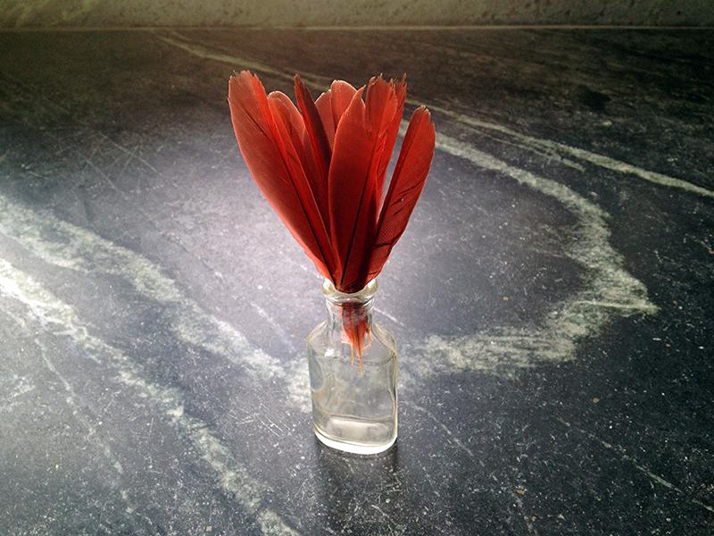 Cardinal Tail2AWeb