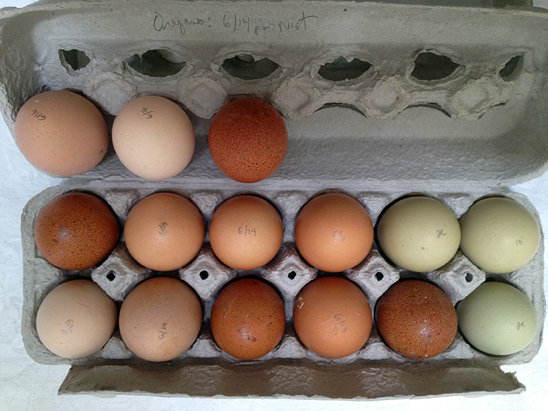 EggsWeb