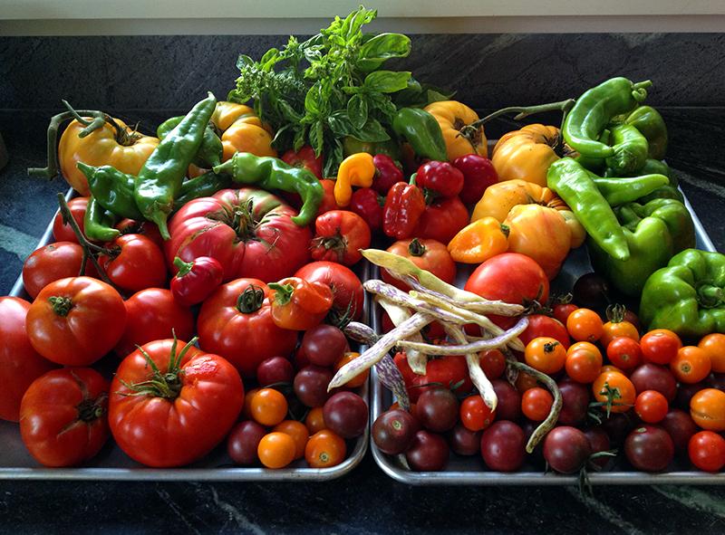 TomatoesWeb