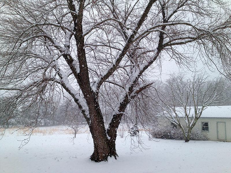 SnowGarageWeb